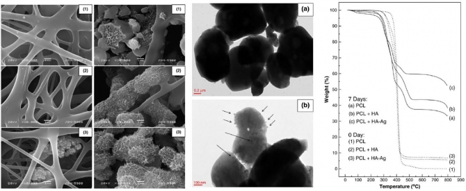Structural  thermal  mechanical and bioactivity evaluation of silver-loaded bovine bone hydroxyapatite grafted poly(ε-caprolactone) nanofibers via electrospinning