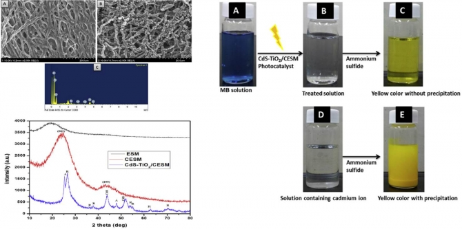 CdS-TiO2 decorated carbonized eggeshell membrane for effective removal of organic pollutants: A novel strategy to use a waste material for environmental remediation