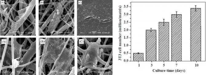 Novel biodegradable electrospun membranes: scaffold for tissue engineering