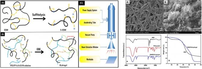 Preparation and characterization of eggshell membrane/PVA hydrogel via electron beam irradiation technique